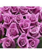 400 Long Stem Lavender Roses