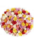 200 Long Stem Assorted Roses