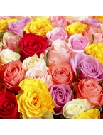 75 Long Stem Assorted Roses!
