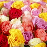 400 Long Stem Assorted Roses
