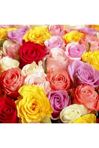 100 Roses(50 RED, 25 WHITE and 25 PINK)
