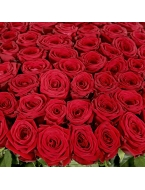 75 Long Stem Red Roses
