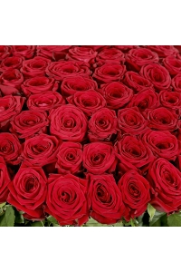 70 Red Roses