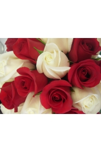 150 Long Stem Roses(75 RED + 75 WHITE)