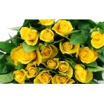 400 yellow roses