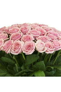 400 pink roses