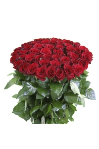 "50 Long Stem(20"") RED Roses"