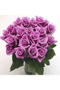 25 Grand Box Lavender Roses