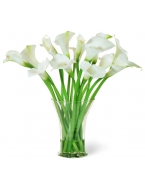 11 Green and 30 White Callas