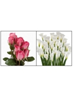 75 Dark Pink Roses with 30 White Callas