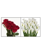 75 Red Roses with 30 White Callas