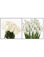 75 White Roses with 30 White Callas