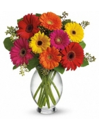 70 Assorted Grand Box Gerber Daisies