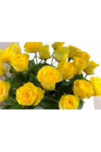 Cheap Yellow Roses