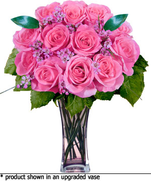 Pink Roses Ahhh Beautiful Aromatic Are One Of The Oldest Known To Us And Have A Rich History That Dates Back Some Most