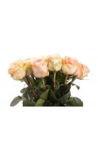 100 Long Stem Peach Roses