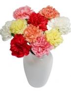 100 Carnation Explosion