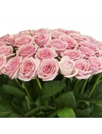 75 pink roses